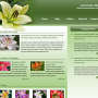 web design template / plantilla de Web Design